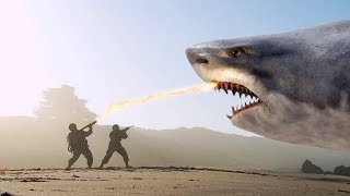 THE 10 BIGGEST SHARKS Ever !