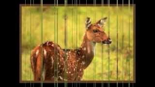 Qissa Hirni by Alam Lohar - Pakistan Radio Version