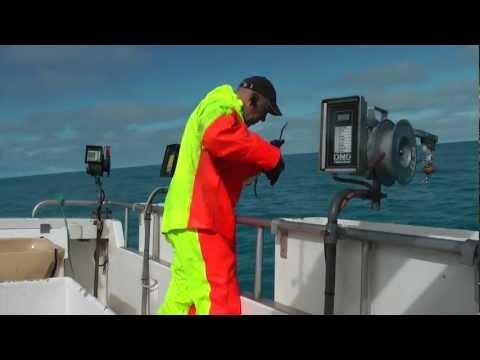 ISLANDE pêche à la morue les poissons saignent aussi