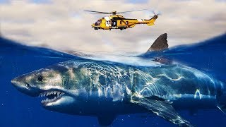 What If MEGALODONS Were Still ALIVE?