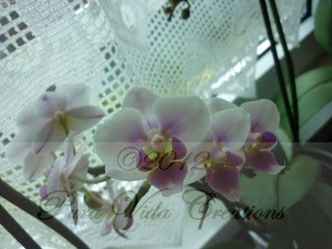 Plantas de interior cuidados y consejos para anturio - Cuidado de plantas de interior ...