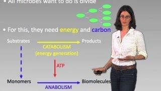 Microorganism Metabolism - Dianne Newman (Cal Tech/HHMI)