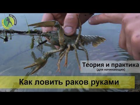 показать видео как ловят раков