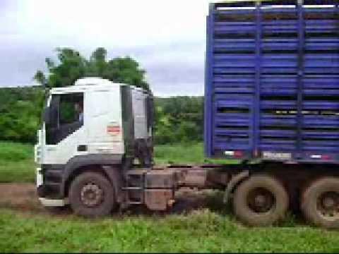 VIDEO 1 Caminhão Boiadeiro Araguaina To