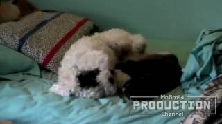 Dogs and cats fighthing for beds   Funny dog & cat compilation
