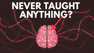 What If You Were Never Taught Anything?
