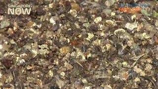 Farming black gold (Quail farming Pt 2)