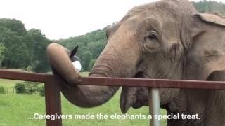 Elephant Sanctuary Celebrates Nashville Preds in Stanley Cup Finals