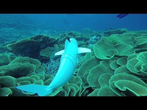 Xxx Mp4 A Robotic Fish Swims In The Ocean 3gp Sex