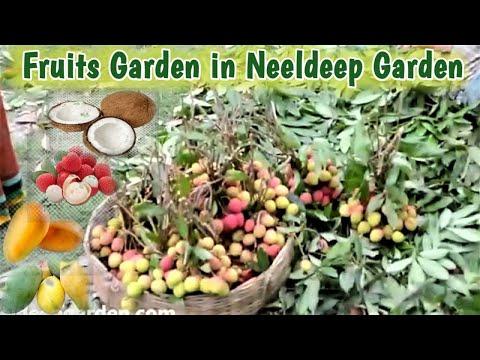 Neeldip- Bagan bari for picnic spot in Kolkata