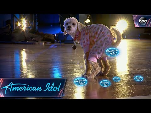 Xxx Mp4 American Idol Audition Goes To The Dogs American Idol On ABC 3gp Sex