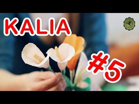 Kwiatki z bibuły 5 kalia