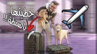 قررت اخذ كلابي ونسافر إلى دبي😱 !!