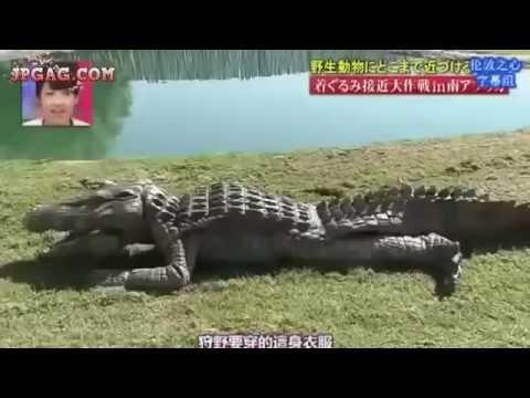 Video Lawak Dari Jepun Menyamar Jadi Buaya Jepang