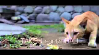 Mekiken Kala (amah mercon) TAKSU north BALI