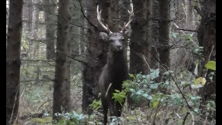 WILD Jaeger Czech Sika Deer Hunt (Sikahirschjagd), Season 1