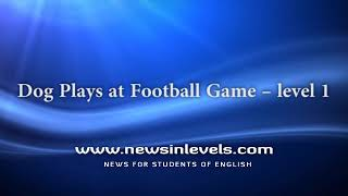Dog Plays at Football Game – level 1