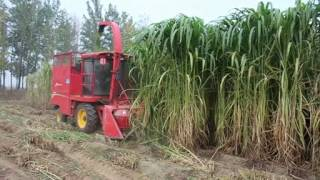 napier grass/ corn maize forage harvester silage making machine video
