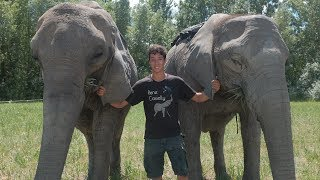 20-Year-Old Acrobat Performs Tricks With His Elephant Family   BEAST BUDDIES