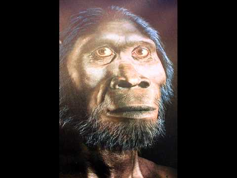 Xxx Mp4 Tarzan The Ape Man By Tammy 3gp Sex