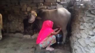 pc mobile Download Rajasthani WhatsApp video(4)