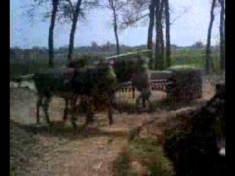 xxx donkey ke saza
