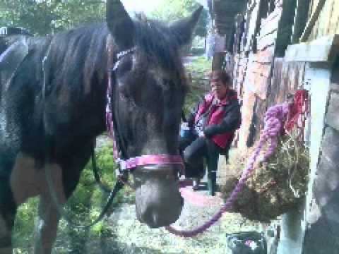 Xxx Mp4 A Bond Between One Girl And A Horse X Wmv 3gp Sex