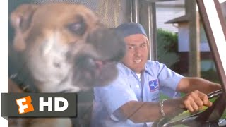See Spot Run (2001) - Whose Dog Is That? Scene (5/8) | Movieclips