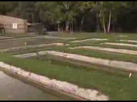 Alevines de tilapia roja Granja Politécnico JIC San Jerónimo