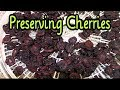 Download Video Download Freezing and Dehydrating Cherries 3GP MP4 FLV
