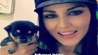 Sunny Leone Love For Her Pet Dogs  Gives Bath  Plays