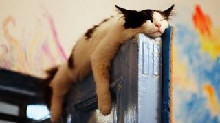 These SLEEPY and CLUMSY CATS and DOGS will make your day - Funny and cute cats and dogs compilation