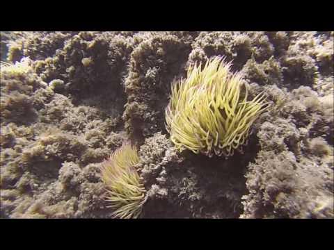 Xxx Mp4 Día De Snorkel En Playa Cabria Almuñécar Agosto 2016 3gp Sex