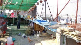 Birds Aviary || Domestic Birds || Indian Birds Aviary || Birds || lots of Species enjoy in Aviary