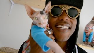 iAmMoshow - Cat World (Official Video)