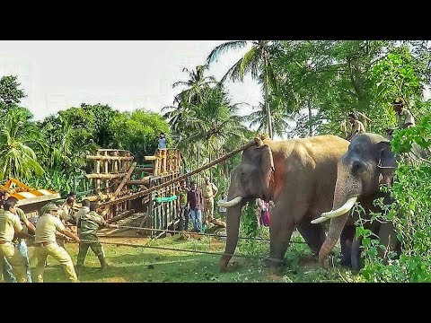 Capturing killer elephant that took the life of 7 people Attappadi Kerala