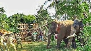 Capturing killer elephant that took the life of 7 people [Attappadi, Kerala]
