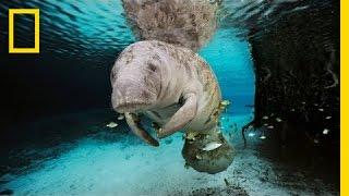 The Mermaid Myth | Nat Geo Live