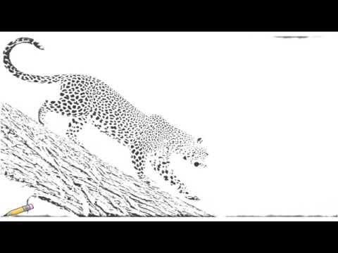 Xxx Mp4 Auto Draw 2 African Leopard Samburu National Reserve Kenya 3gp Sex
