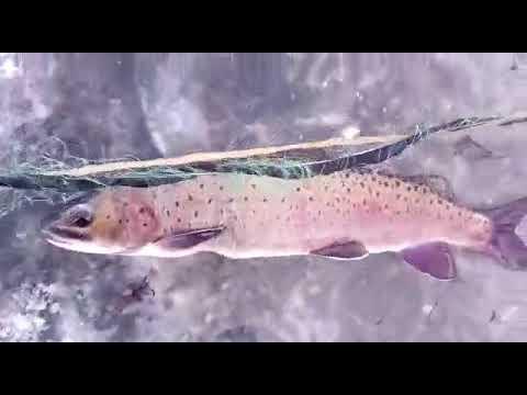 рыбалка на реке ледь