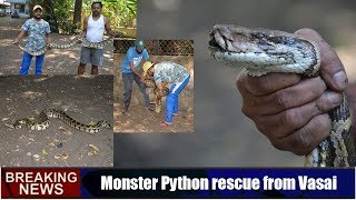 Monster Python rescue from Vasai