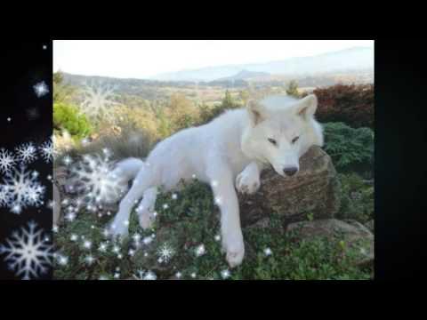 Xxx Mp4 The White Wolf 3gp Sex