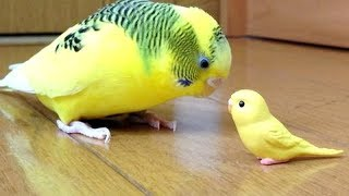 Forget CATS & DOGS! BIRDS are WAY FUNNIER! - It