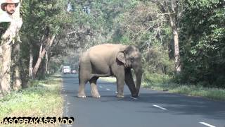 Elephant Disturbed by Truck Driver(Jaso's VDO)