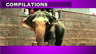 Hrithik Roshan fights with wild Elephant -- Jodha Akbar