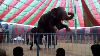 A beautiful elephant game.সুন্দর একটি হাতির খেলা