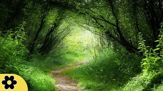 Healing Meditation Music, Relaxing Music, Music for Stress Relief, Background Music, ✿2833C