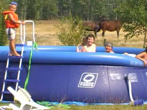 Horse sex by the pool