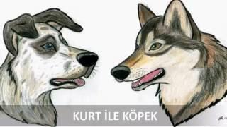 Kurt ile köpek masalı
