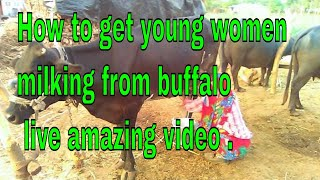 how to get young  women milking from buffalo live amazing video .